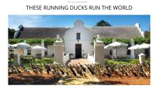 http://thebacklabel.com/these-running-ducks-run-the-world/#.WKe0hxIrLR0
