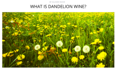 http://thebacklabel.com/recipe/what-is-dandelion-wine/#.WKe0hhIrLR0