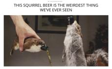 http://thebacklabel.com/squirrel-beer/#.WKe0kRIrLR0